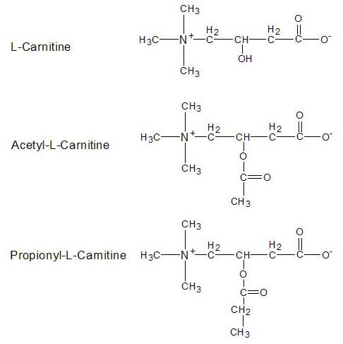 L-КАРНИТИН. Он же левокарнитин.